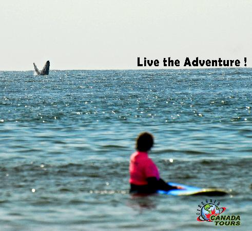 Discover Canada Tours: Do you want to live an amazing time? Tofino is the place to be!
