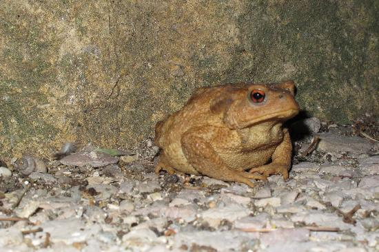 L'Ancienne Auberge: Toad outside the church