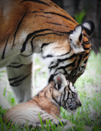 Palm Beach Zoo & Conservation Society: Malayan at play