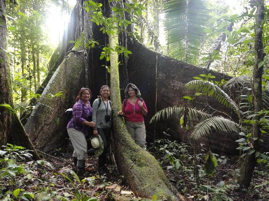 Manatee Amazon Explorer: On the Yasuni Forest Hike under a giant Kapok tree