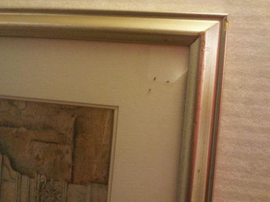 Comfort Inn Concord: another photo of the bugs in the picture