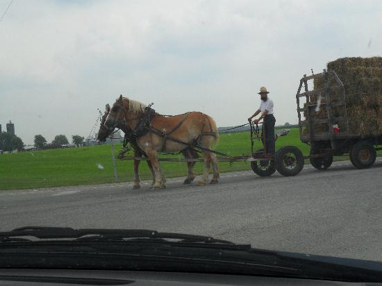 Best Western Inn: Amish Horses