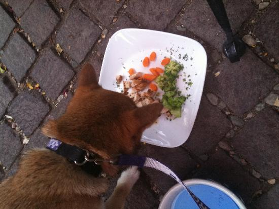 Graham's Grille: Our pup scarfing down her chicken dish