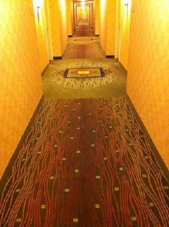 Hilton Garden Inn Naperville/Warrenville: filthy carpet