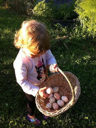 Stonehaven Family Farm: Gathering the eggs for breakfast