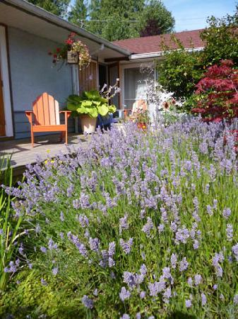 Wisteria Guest House: Lavendar leading to entry