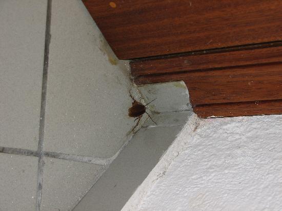 Studios Eleni: Lo scarafaggio...