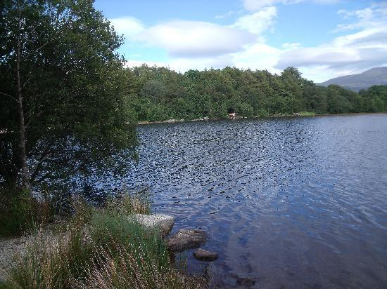 Brynteg Holiday Home Park: lake on site