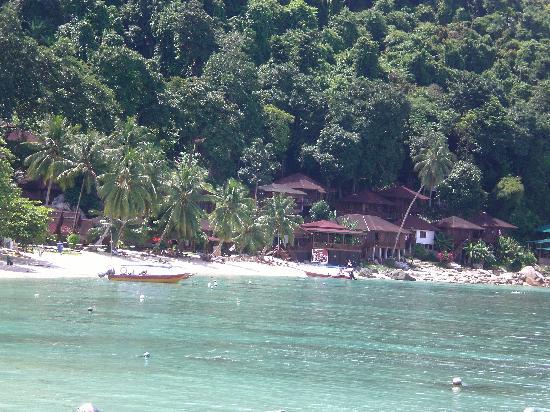 Senja Bay Resort: Eccolo visto dal molo!