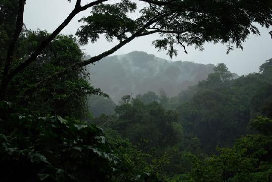 Bwindi Impenetrable National Park: Misty jungles of Bwindi - gorilla habiat