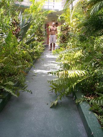 El Patio Motel: Garden Walkway Through Center Of Hotel
