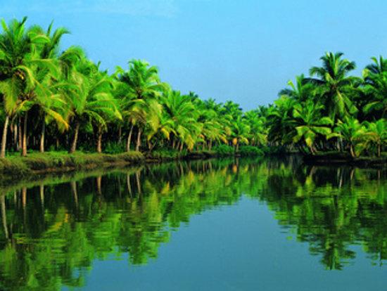 Carnival Tours & Travels: Aleppey Kumarakom Kollam Backwaters Tour Packages Kerala