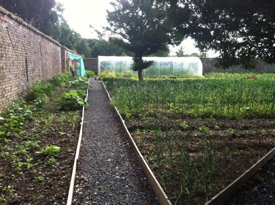 Veg Garden at Tankardstown