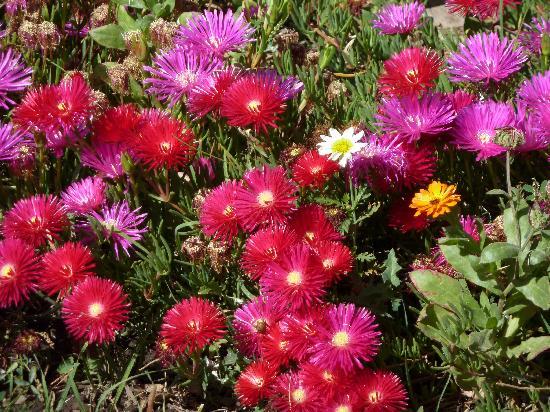 Chiguata, Перу: Flores en la Plaza de Armas