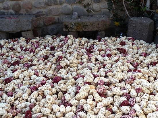 Chiguata, Перу: Granos de choclo (maíz) en un patio de una casa