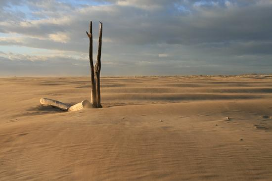 Abri de Camargue: La plage de l'Espiguette