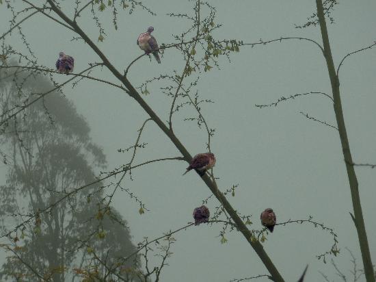 Reserva Nacional Lomas de Lachay: Más pájaros