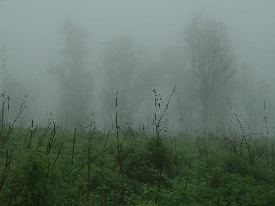 Reserva Nacional Lomas de Lachay: Árboles en la neblina