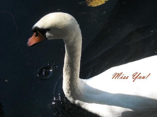 Pension Mlino: Swan