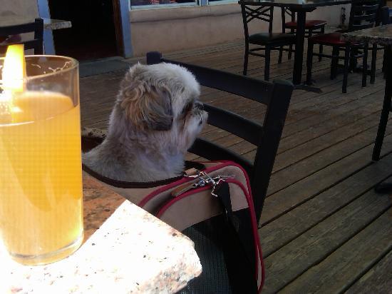 Corrales Bistro Brewery: patio doggie