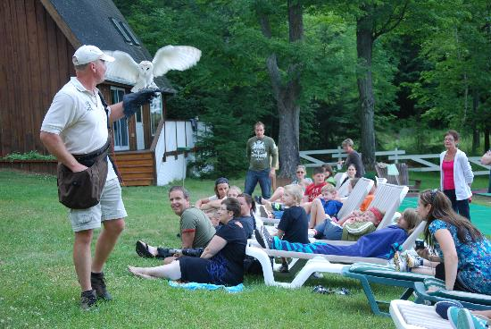 Shamrock Lodge: Bird of Prey Show