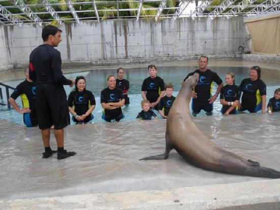 Comfort Suites Paradise Island: sealion encounter at Atlantis