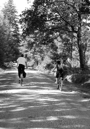Biker's Delight: New Forest Aug 2011