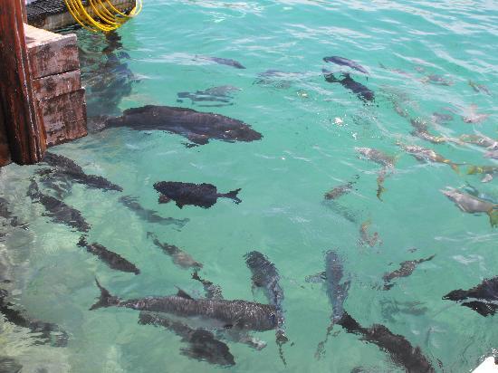 Grand Bahia Principe Coba: fish you will swim and snorkle with
