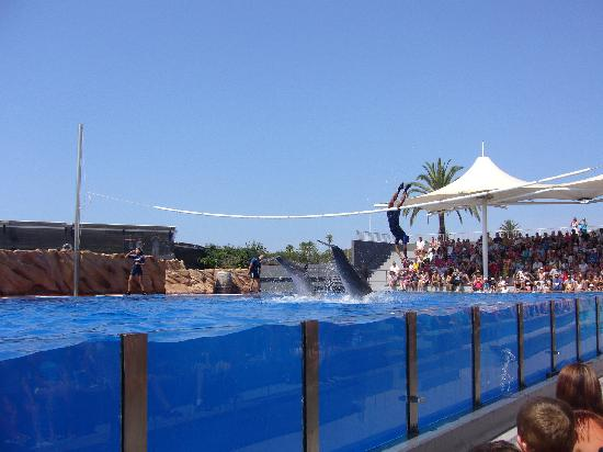 Calvia, Spain: saltar con los delfines