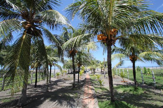 Poneloya, Nikaragua: coconut trees within the property on its way to the beach