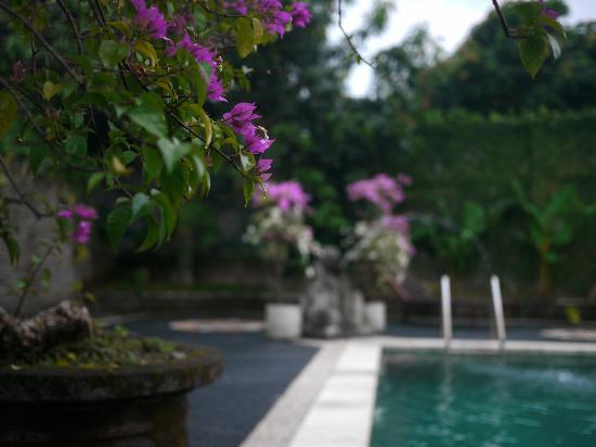 อูบุด วิว บังกะโล: Pool view