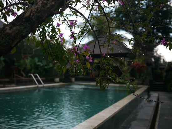 Ubud View Bungalows: Pool view