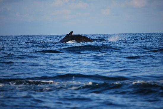 Casita Corcovado: les baleines