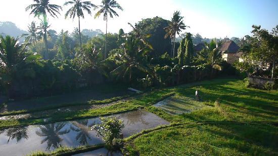 อูบุด วิว บังกะโล: View from our balcony, room T1