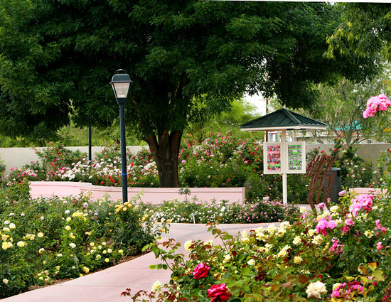 Rose Garden at Mesa Community College: The Rose Garden at MCC