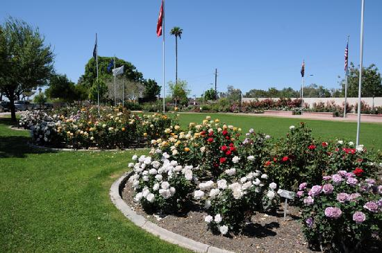 Rose Garden at Mesa Community College : The Rose Garden at MCC
