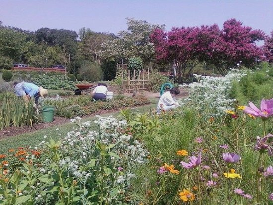 Hollywood, MD: Volunteer Gardeners