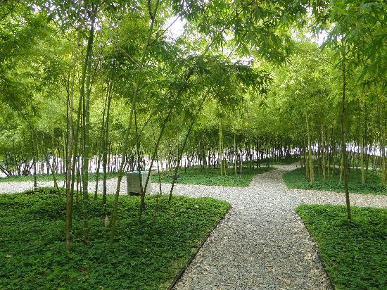 Bare Foot Park (Parque de los Pies Descalzos): Zonas verdes