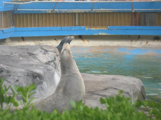 Sea Life Park Hawaii: Sea Lions at Sea Life Park
