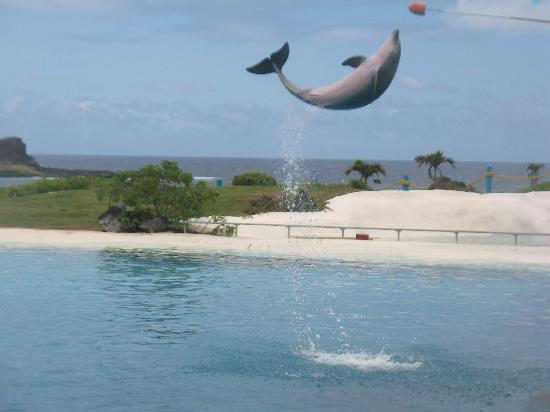 Sea Life Park Hawaii: Dolphin Show at sea life park