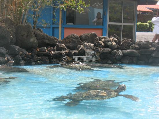 Sea Life Park Hawaii: Sea Turtles at Sea Life Park