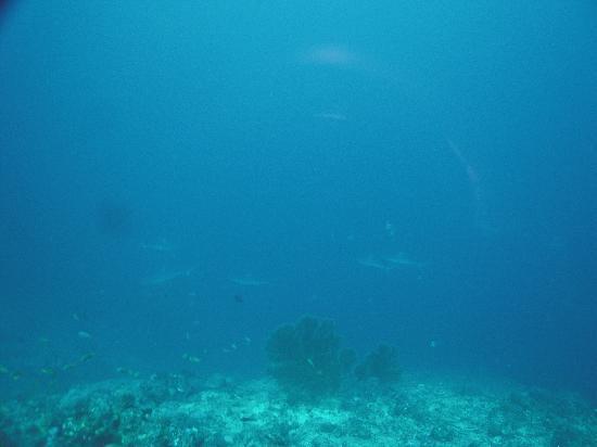 Abyss Plongee: Sharks!
