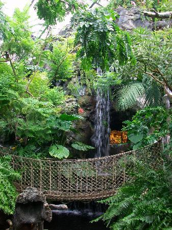 The Buffalo Zoo: Rainforest Falls
