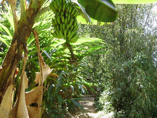 Ela Ecoland Nature Retreat: Gods own Kerala