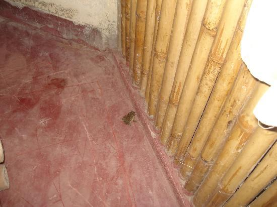 GL's Kaziranga Resort: frog spotted in the cottage