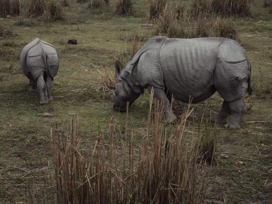Kaziranga National Park 사진
