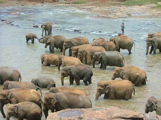 Pinnawala Elephant Orphanage: bath time