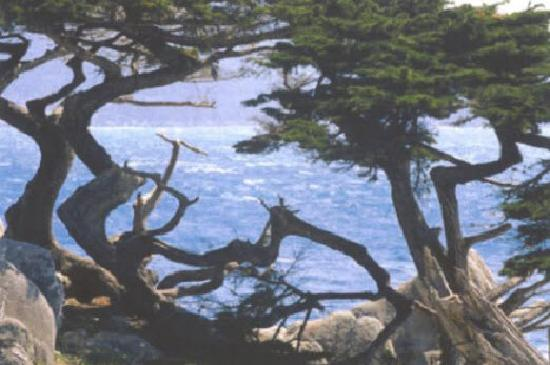 Μοντερέι, Καλιφόρνια: Monterey County Convention & Visitors Bureau