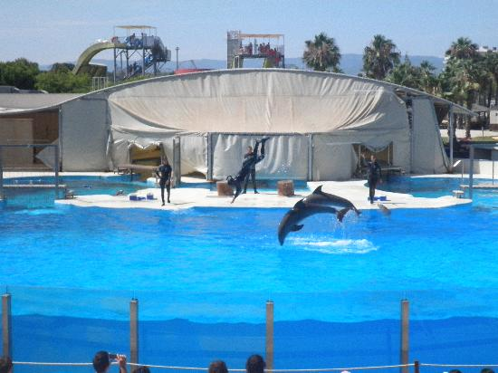 California Garden: Dolphin show at Aquapolis