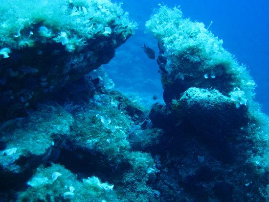 Paesino Diving Center: dive